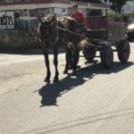 donky-cart-img_0912_1024