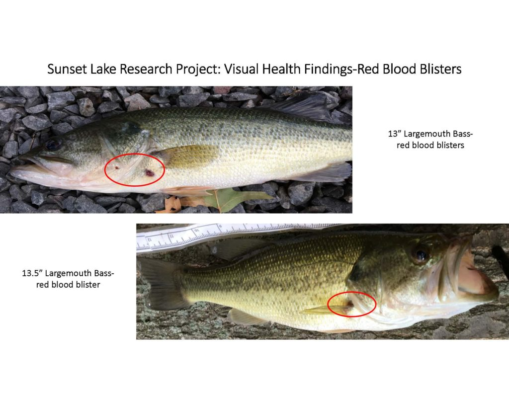 fish-of-sunset-lake-research-project_page_05