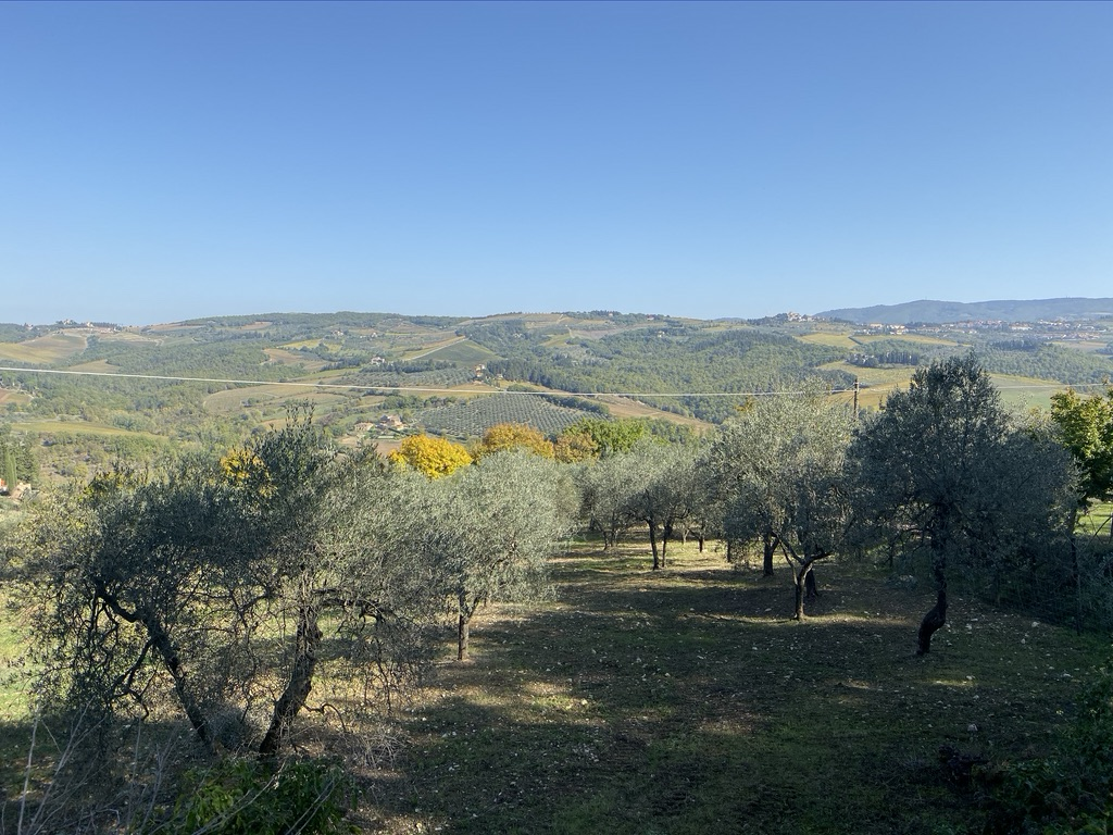 Tuscony Olive Orchard Vista