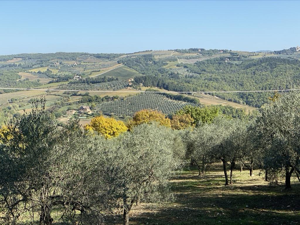Tuscany Olive Orchard Vista